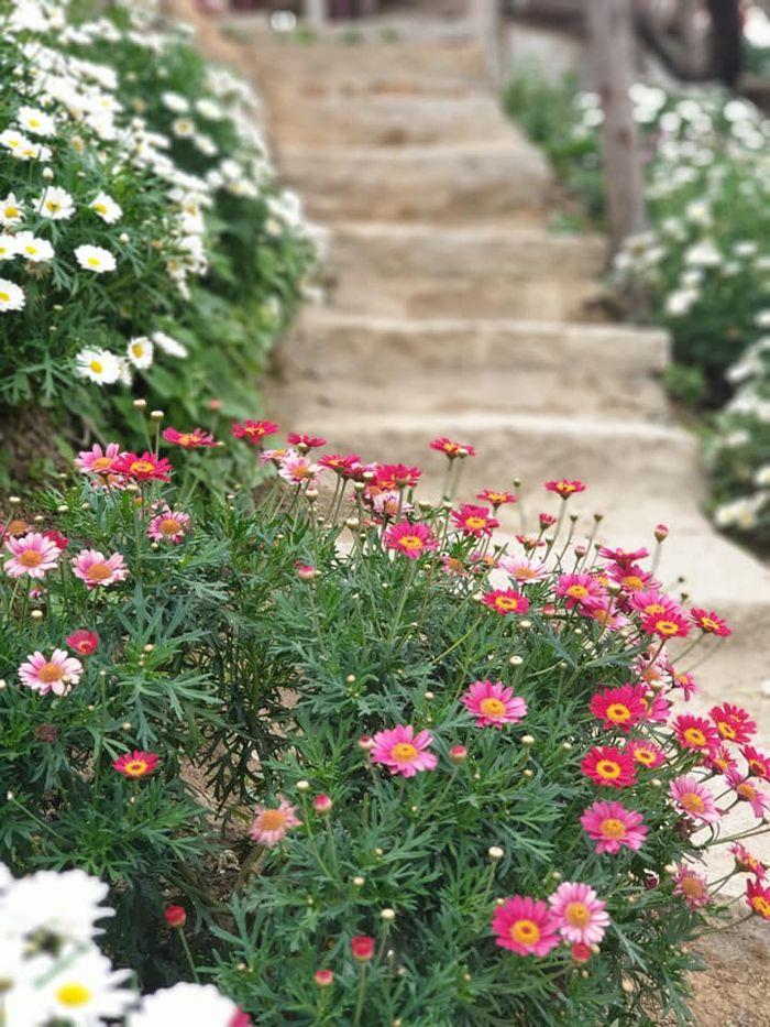 Hoa mùa xuân rực rỡ