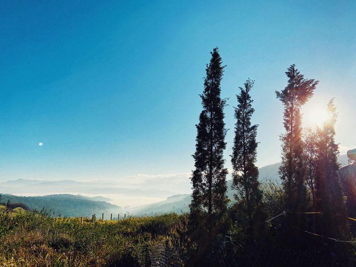 Khí hậu Đà Lạt mang đặc trưng cao nguyên