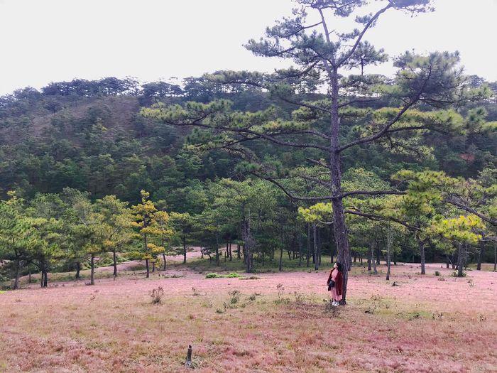 Khí hậu Đà Lạt mát mẻ ở đồi cỏ hồng
