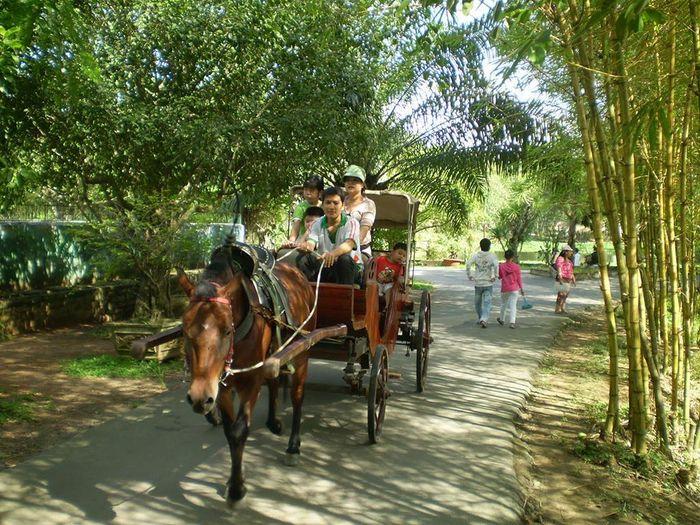Thú vị đi xe ngựa ở Cồn Phụng