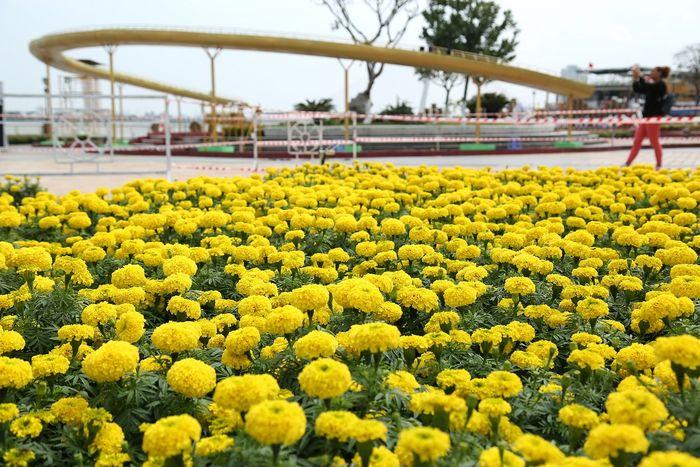 Không gian hoa rực rỡ ở thành phố
