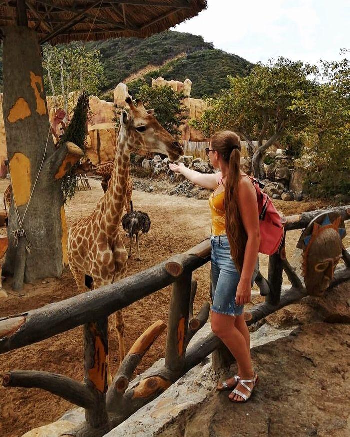 Trải nghiệm thú vị ở Vinpearl Safari