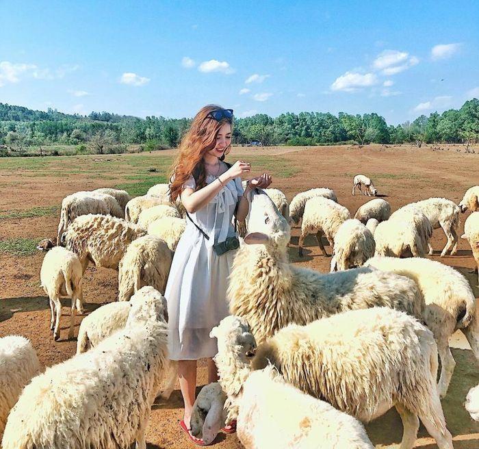 Đồng cừu An Hòa nổi tiếng Ninh Thuận