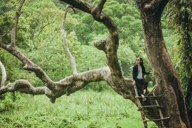 Cây đa cổ thụ tại Nhất Thủy Lâm Trang Trà