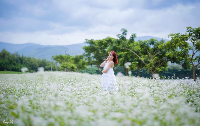 Hoa tam giác mạch đầy thơ mộng ở Đà Lạt
