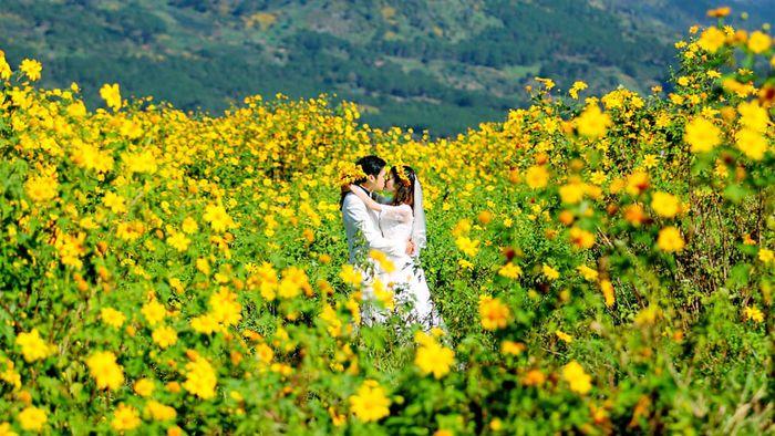 Mùa hoa dã quỳ đẹp rực rỡ ở Đà Lạt