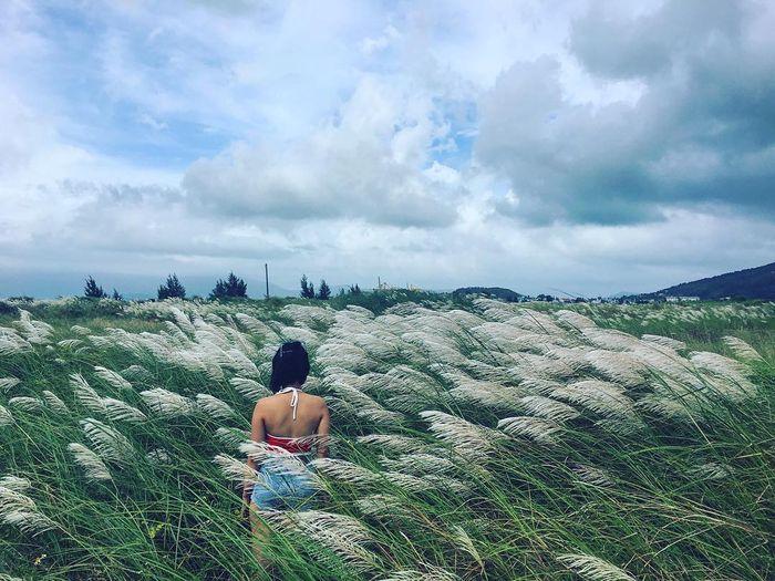 Cánh đồng cỏ lau để check-in cực nghệ